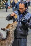 Олени молодого местного человека питаясь в парке стоковая фотография rf