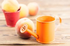Один свежий весь зрелый персик в красном ведре металла и 3 персиках отдельно и оранжевой моча консервной банке стоковая фотография