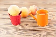 Один свежий весь зрелый персик в красном ведре металла и 2 персиках отдельно и оранжевой моча консервной банке стоковое фото
