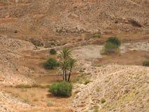 Одиночная пальма в городе Matmata, Туниса, Африки стоковые фотографии rf