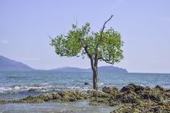 Одиночное постоянное дерево которое трясет в море стоковая фотография