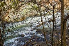 Одичалый поток форели горы стоковая фотография rf