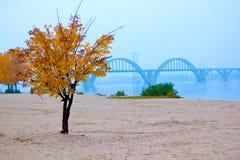 Осенний пляж Stock Photo