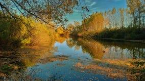 Осень в лесу stock photo