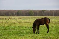 Осленок в поле стоковое изображение rf