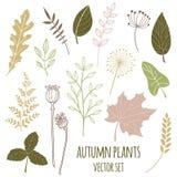 Set of botany sketches and line doodles royalty free illustration
