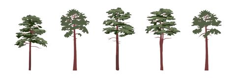 A collection of coniferous trees of pines vector illustration