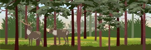 Family Wild reindeer in the pine forest royalty free illustration