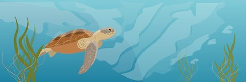 A large green sea turtle soup swims under water. Seaweed royalty free illustration