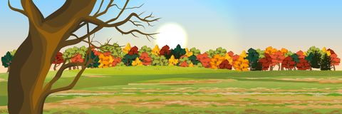 Autumn deciduous forest vector illustration