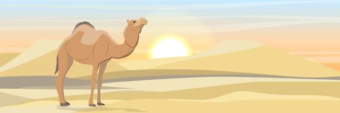 One-humped camel in the desert with sand dunes. Wildlife of Africa royalty free illustration