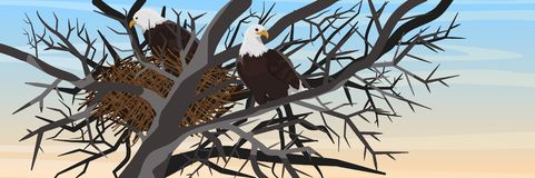A pair of bald eagles sits in a nest of branches on a tree vector illustration