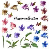 Set of flowers of different colors on a white background. Violets. vector illustration