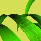 Green leaves on yellow background. Summer concept. stock photography