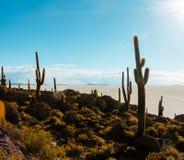 Остров кактуса в боливийской квартире соли Uyuni стоковое фото