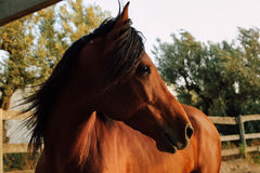 Лошадь Horse. We traveled to Africa. In the resort area of ​​Hammamet, we met this wonderful friend Stock Image