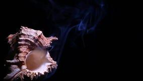 Отснятый видеоматериал hd предпосылки темноты дыма Seashell голубой акции видеоматериалы