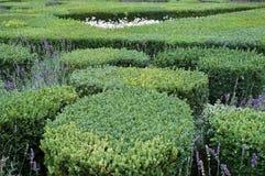Отрежьте коробку ограничивает в саде ренессанса Villandry, Франции стоковые изображения rf