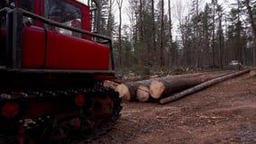 Отрезанные деревья лежат на одине другого сток-видео