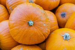 Оранжевые тыквы в деревянной коробке стоковые изображения