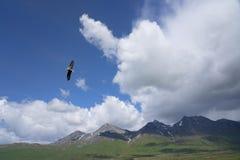 Орел в Юконе стоковая фотография