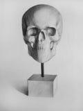Ołówkowy rysunek Cranium, czaszka, Anatomic rysunek (,) ilustracji