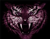 Ołówkowy rysunek zbliżenie groźny biały i purpurowy tygrys z fiołków oczami odizolowywającymi na czarnym tle ilustracja wektor