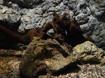 Żołnierz piechoty morskiej rośliny Fotografia Royalty Free