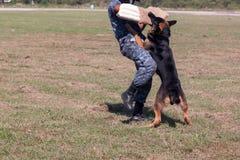 Żołnierze od K-9 psa jednostki fotografia stock