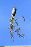 Ośmiornica - duch Fotografia Stock