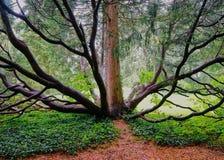 Ośmiornica Lubi drzewa z wieloskładnikowymi bagażnikami fotografia royalty free