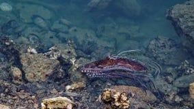 Ośmiornica przy Portowym Tarakohe, Złota zatoka, Nowa Zelandia fotografia stock