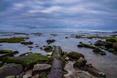 Ośniedziała drymba i morze Obraz Royalty Free