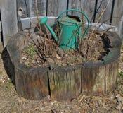 Ośniedziała zielona podlewanie puszka dekoruje z wiejskim wiosna kwiatem Zdjęcie Stock