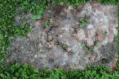 Ośniedziały żelazo na trawie fotografia stock