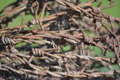 Ośniedziały drut kolczasty Zdjęcie Stock
