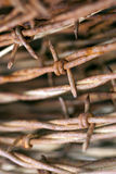 Ośniedziały drut kolczasty Makro- Fotografia Stock