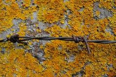 Ośniedziały drut kolczasty na betonowym porosgem koloru żółtego mech Mszysty c Zdjęcie Royalty Free