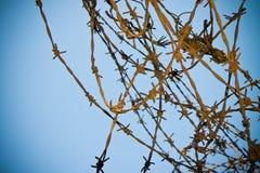 Ośniedziały drut kolczasty przeciw nieba tłu - pojęcie wizerunek obrazy royalty free
