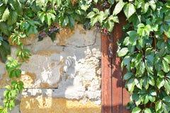 Ośniedziały metalu drzwi, kamienna ściana i roślina, fotografia stock