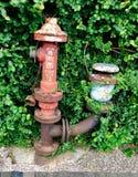 Ośniedziały pożarniczy hydrant zakrywający z winogradami obrazy royalty free