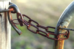 Ośniedziały rolny brama kędziorek Zdjęcia Stock