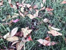 Ośniedziali liście Zdjęcia Stock