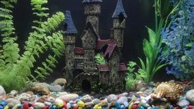 O ¡ de Ð perde-acima de peixes bonitos no aquário Conceito do aquário video estoque