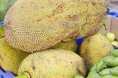 O ³ do fruto e do pão ou do vijahoÃ, Artocarpus communis, incisa de Artocarpus é o fruto tropical fotografia de stock