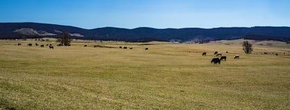 """O †da exploração agrícola de gado """"Burkes o jardim, Virgínia, EUA imagens de stock royalty free"""
