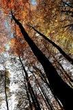 O âmbar e o umber saem nas árvores em Nunburnholme Yorkshire do leste Inglaterra Fotografia de Stock Royalty Free