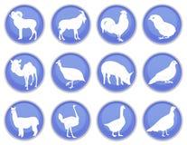 O ícone dos animais domésticos ajustou 2 Imagens de Stock Royalty Free