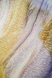 O óleo de motor que foi mudado e misturado com água cria testes padrões bonitos, pode ser usado para fazer um fundo ou um Web sit foto de stock
