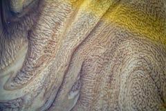 O óleo de motor que foi mudado e misturado com água cria testes padrões bonitos, pode ser usado para fazer um fundo ou um Web sit foto de stock royalty free
